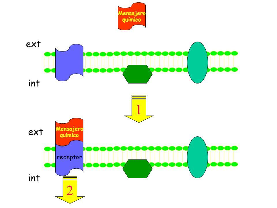 Mensajero químico ext int 1 receptor Mensajero químico ext int 2