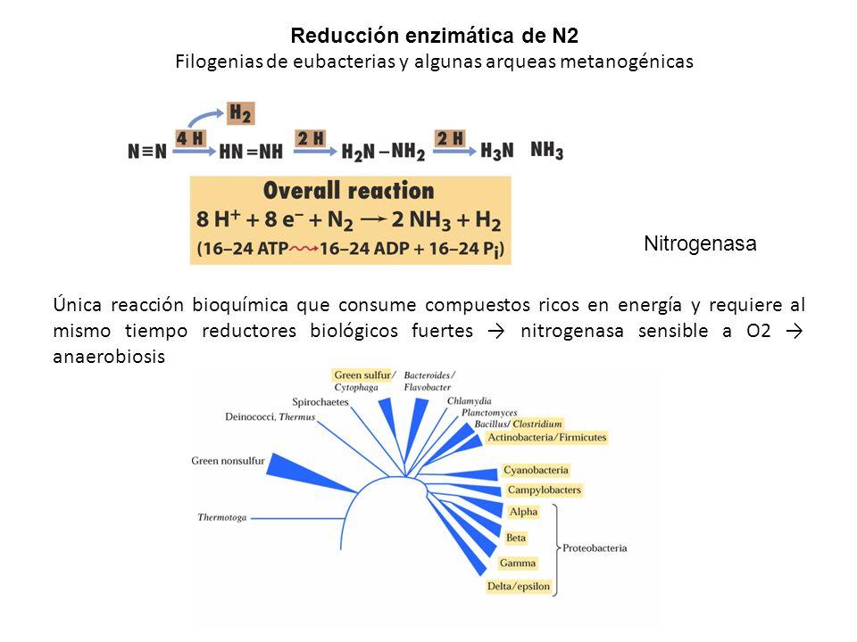 Reducción enzimática de N2