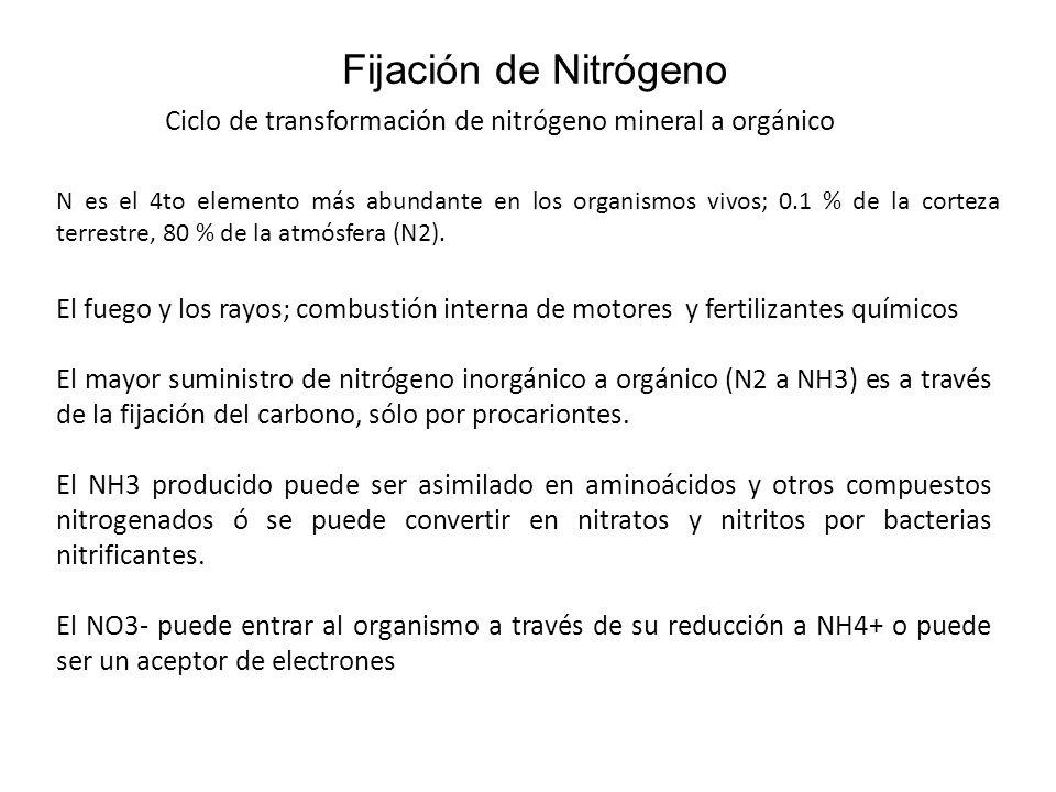 Fijación de Nitrógeno Ciclo de transformación de nitrógeno mineral a orgánico.