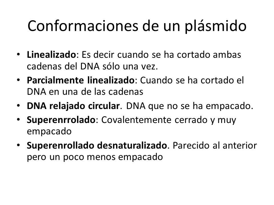 Conformaciones de un plásmido