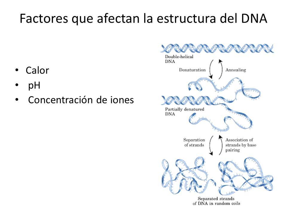 Factores que afectan la estructura del DNA