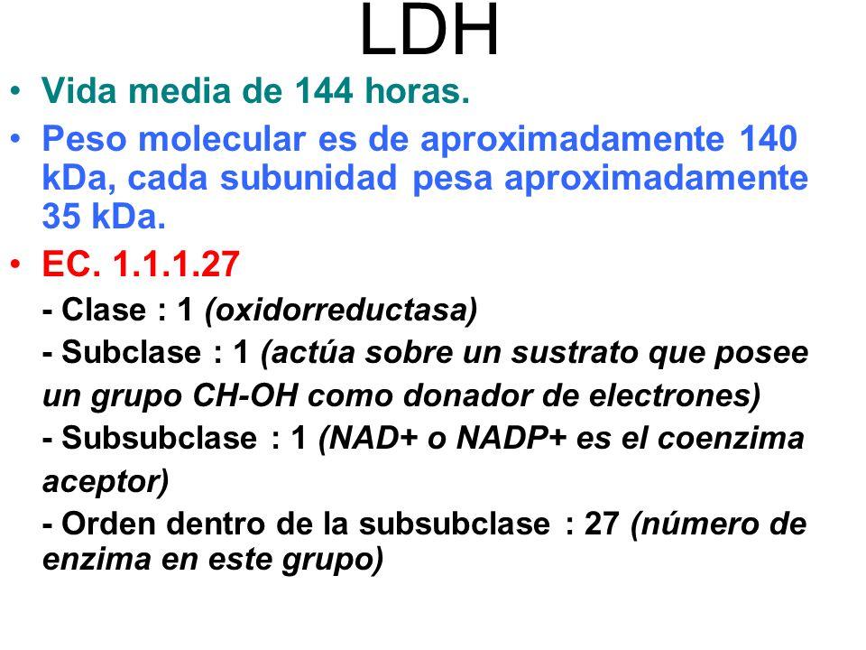 LDH Vida media de 144 horas. Peso molecular es de aproximadamente 140 kDa, cada subunidad pesa aproximadamente 35 kDa.