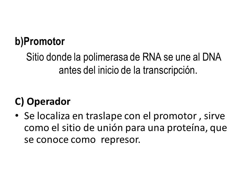 b)Promotor Sitio donde la polimerasa de RNA se une al DNA antes del inicio de la transcripción.