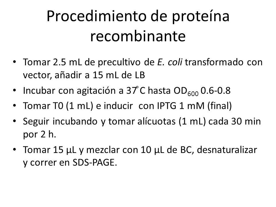 Procedimiento de proteína recombinante