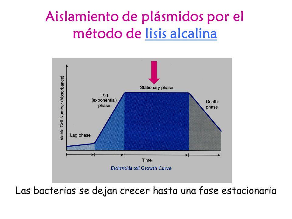 Aislamiento de plásmidos por el método de lisis alcalina