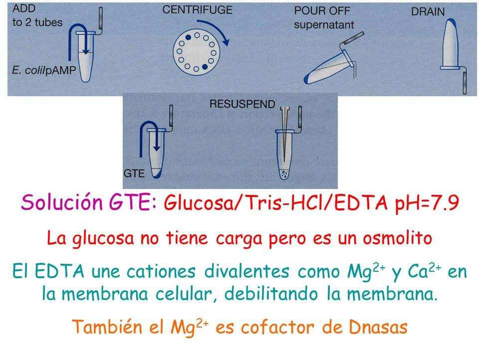 Solución GTE: Glucosa/Tris-HCl/EDTA pH=7.9