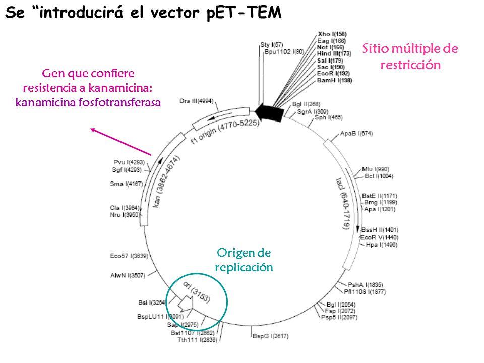 Se introducirá el vector pET-TEM