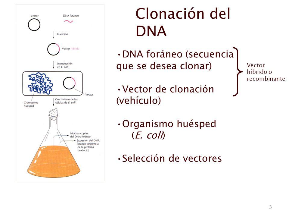 Clonación del DNA DNA foráneo (secuencia que se desea clonar)