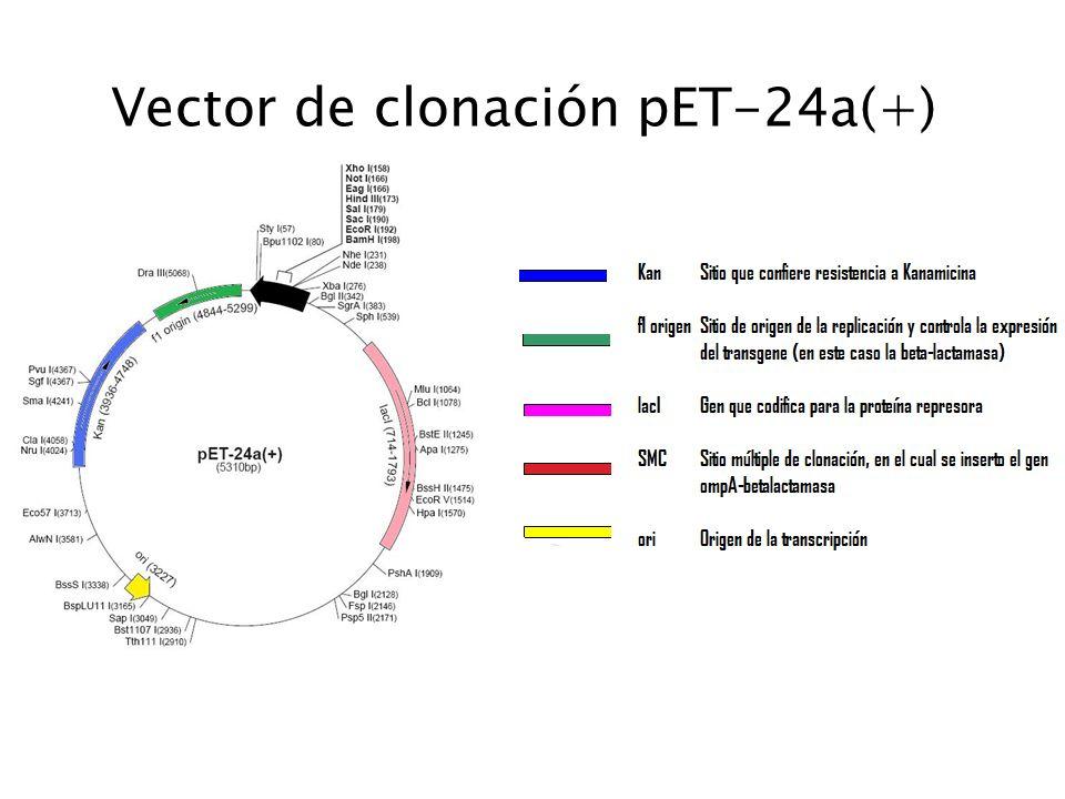 Vector de clonación pET-24a(+)