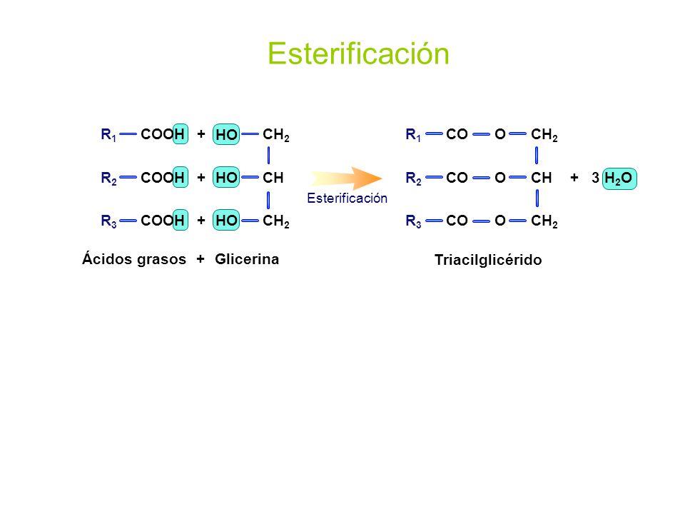 Esterificación R1 COOH R2 R3 + CH2 CH HO CH2 CH O R1 R2 R3 CO + 3 H2O
