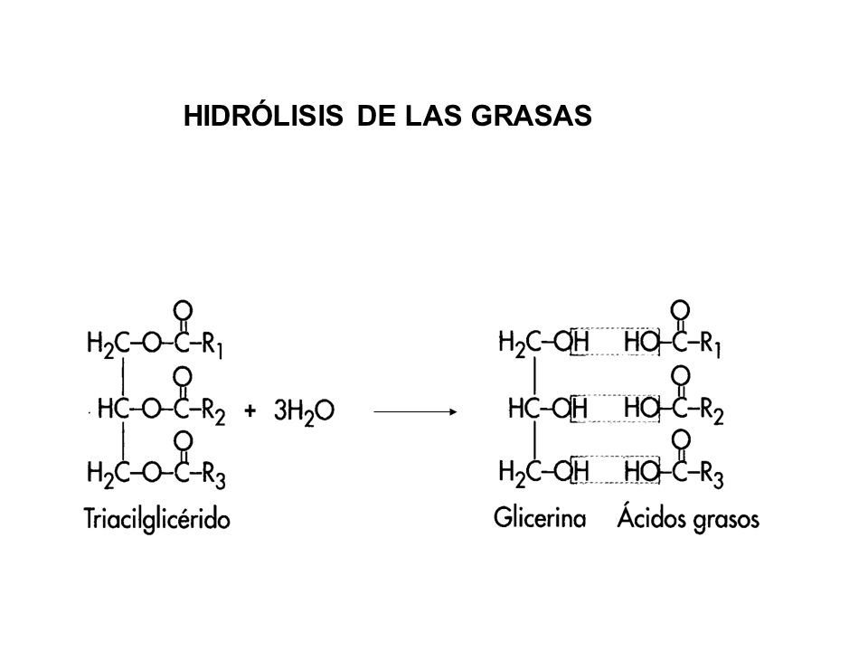 HIDRÓLISIS DE LAS GRASAS