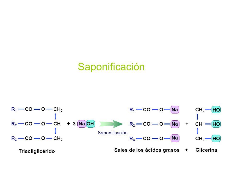 Saponificación CH2 CH O R1 R2 R3 CO Na O R1 R2 R3 CO CH2 CH HO +