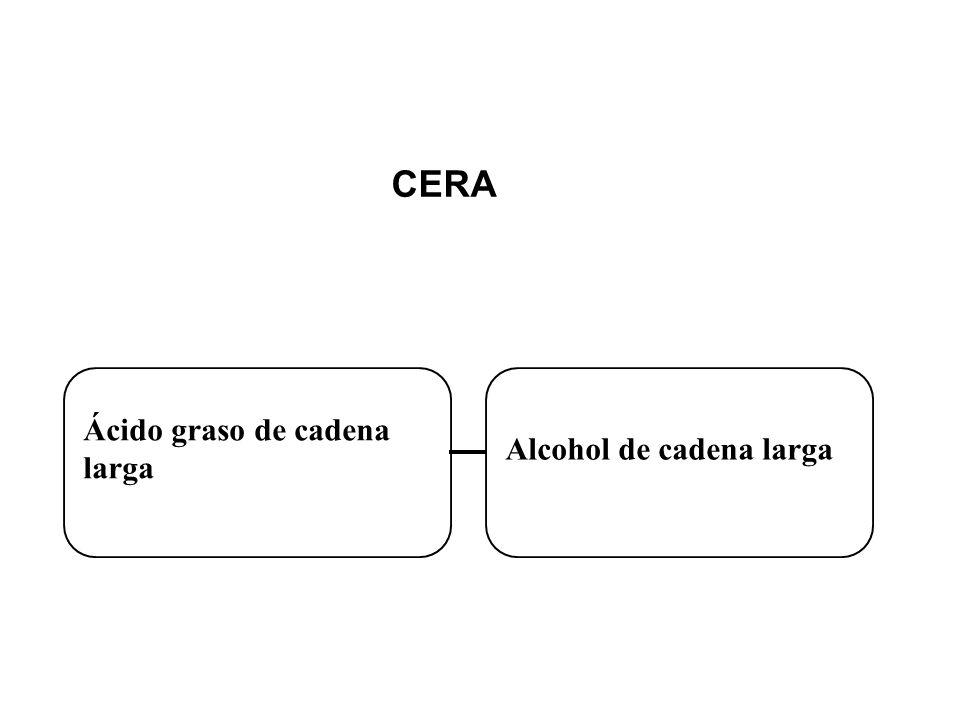 CERA Ácido graso de cadena larga Alcohol de cadena larga
