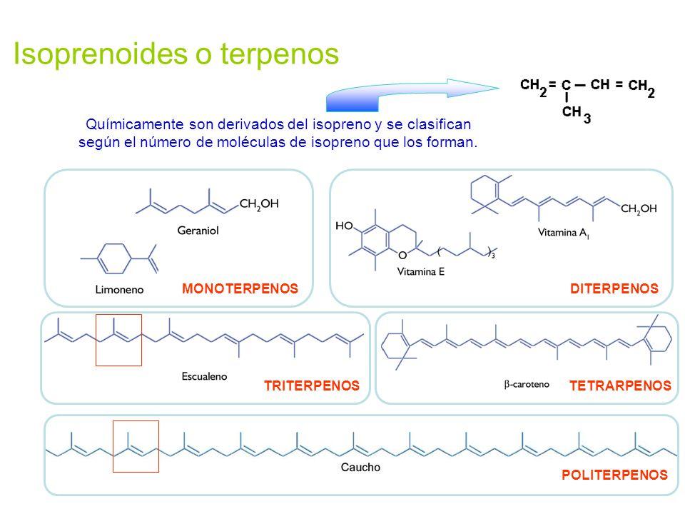 Isoprenoides o terpenos