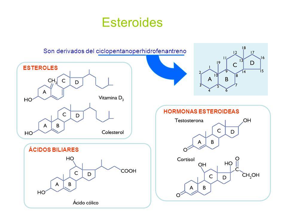 Son derivados del ciclopentanoperhidrofenantreno
