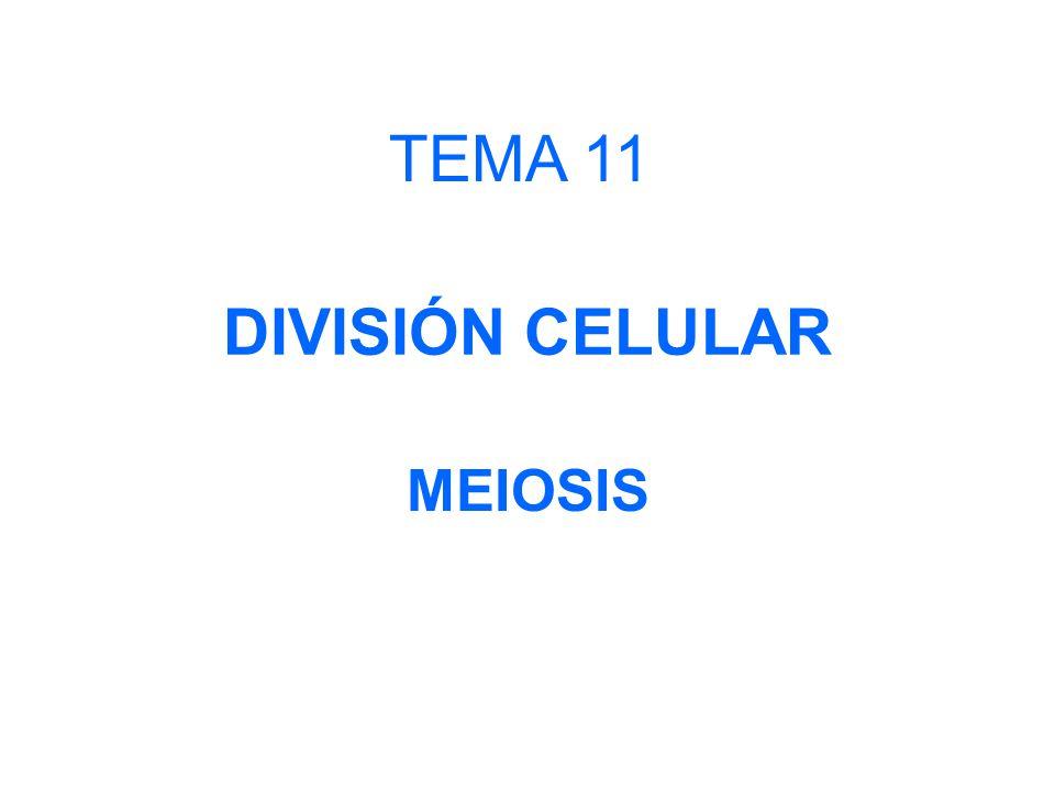 TEMA 11 DIVISIÓN CELULAR MEIOSIS