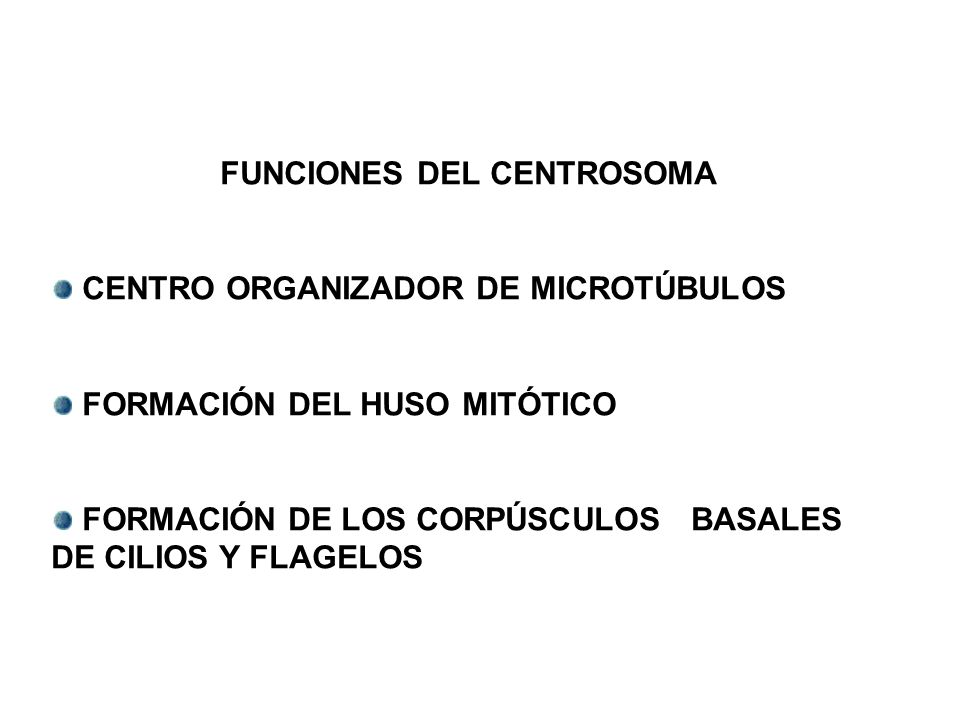 FUNCIONES DEL CENTROSOMA