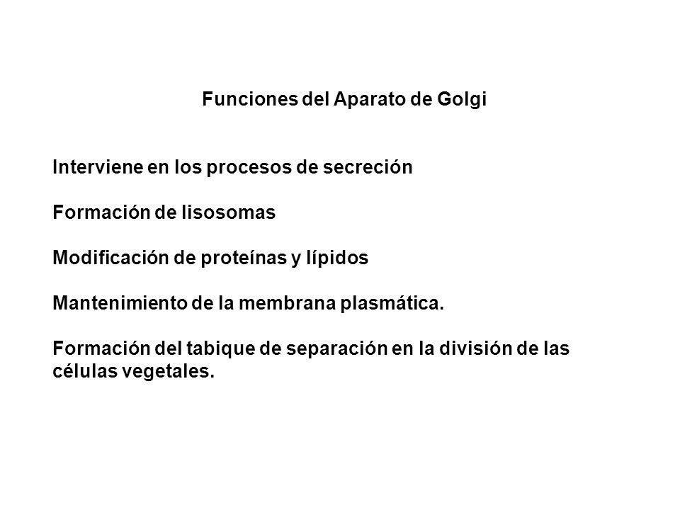 Funciones del Aparato de Golgi