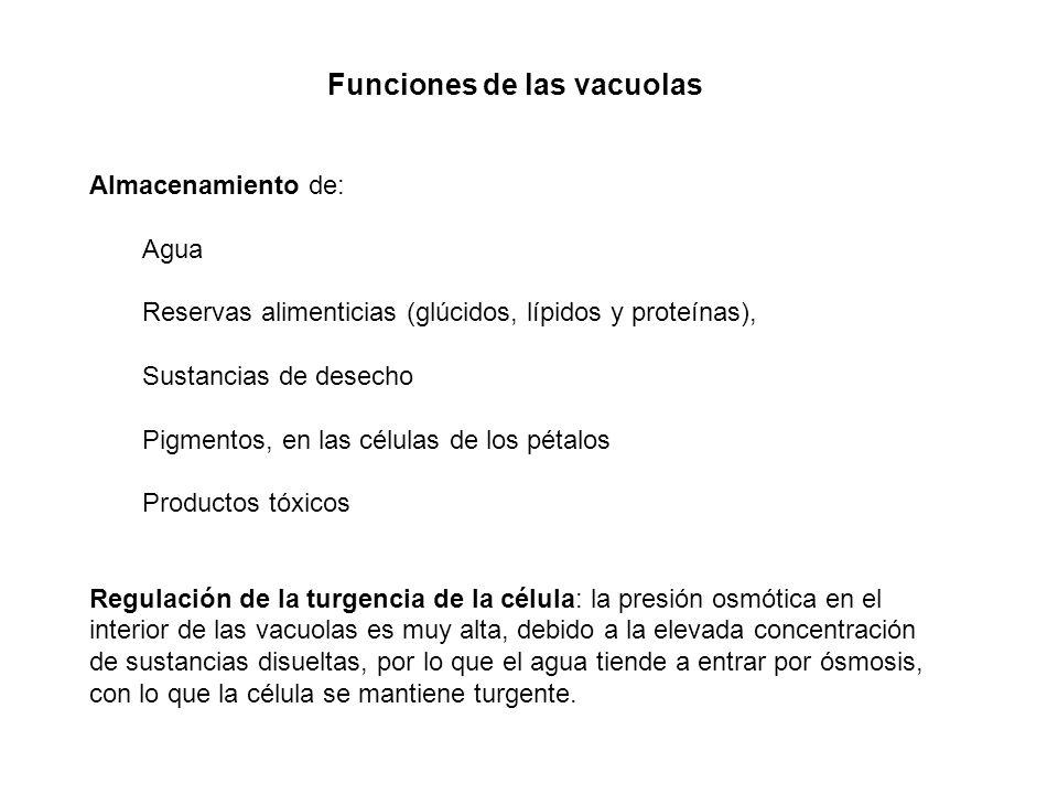 Funciones de las vacuolas