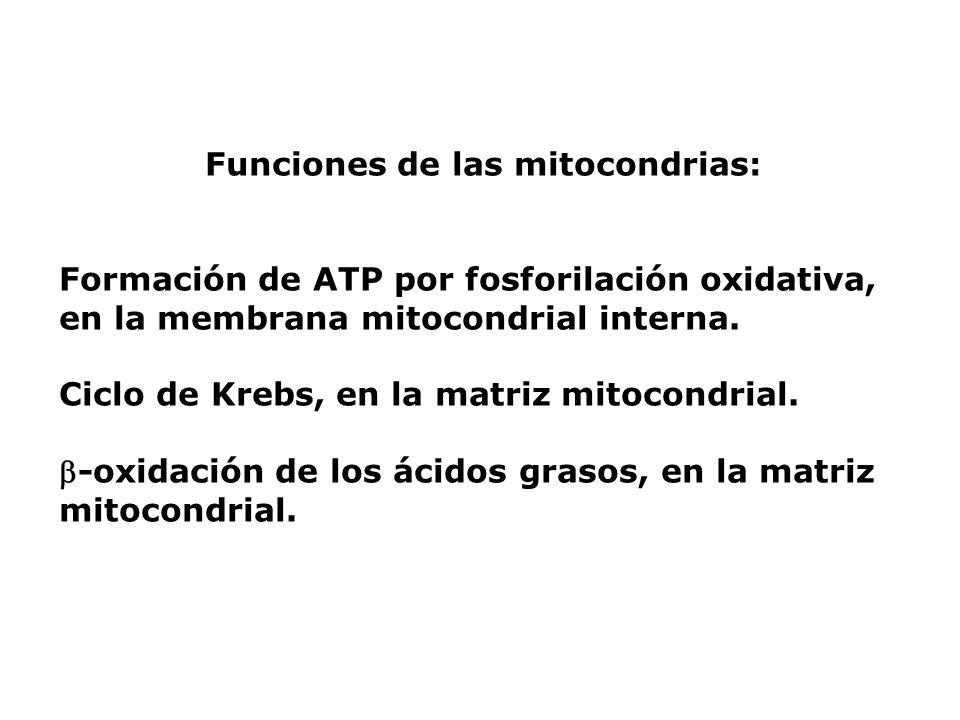 Funciones de las mitocondrias: