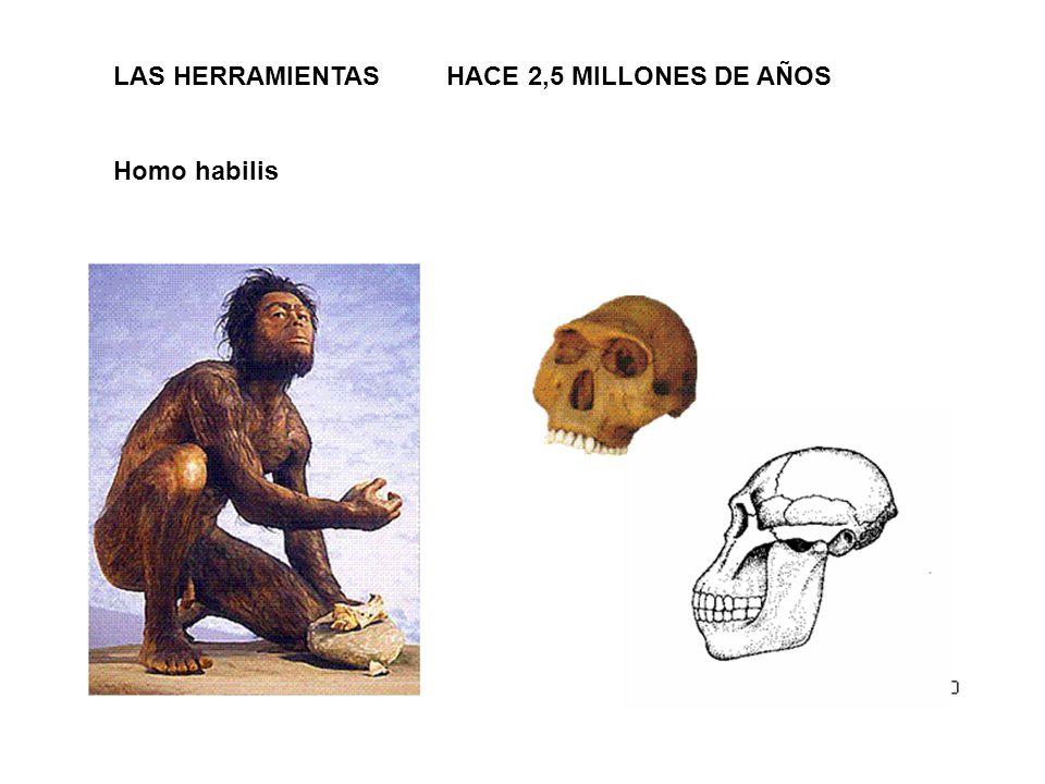 LAS HERRAMIENTAS HACE 2,5 MILLONES DE AÑOS