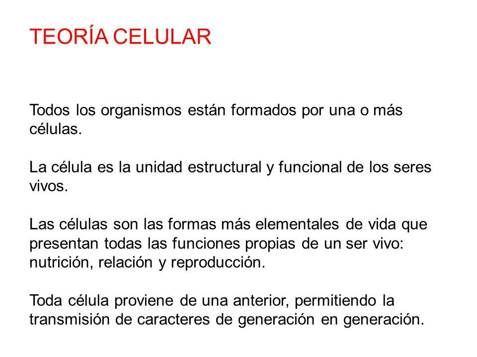 TEORÍA CELULAR Todos los organismos están formados por una o más células. La célula es la unidad estructural y funcional de los seres vivos.