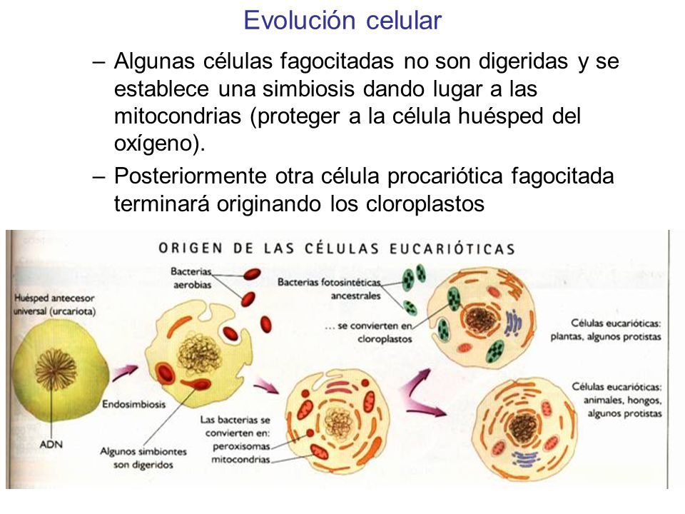 Evolución celular