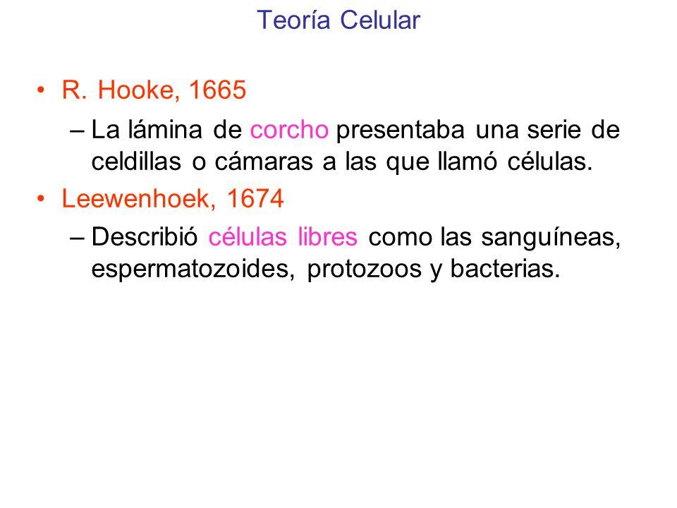 Teoría Celular R. Hooke, 1665. La lámina de corcho presentaba una serie de celdillas o cámaras a las que llamó células.