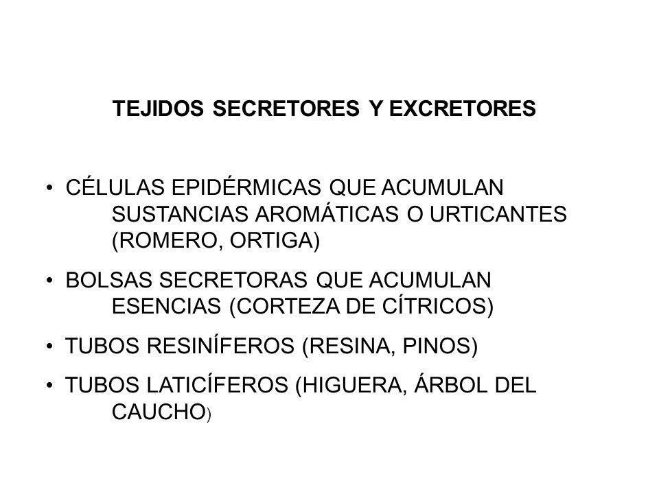 TEJIDOS SECRETORES Y EXCRETORES