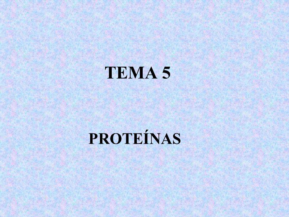 TEMA 5 PROTEÍNAS
