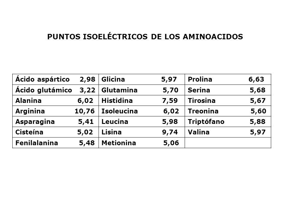 PUNTOS ISOELÉCTRICOS DE LOS AMINOACIDOS