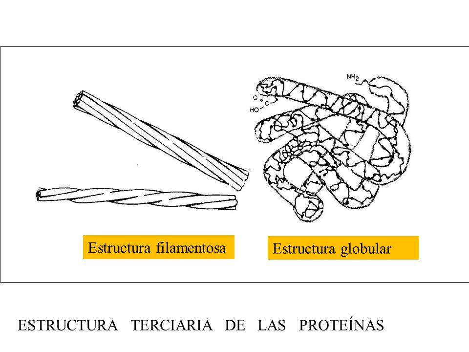 Estructura filamentosa