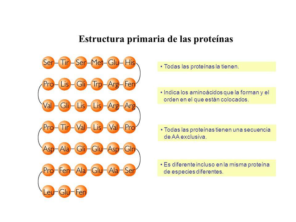 Estructura primaria de las proteínas
