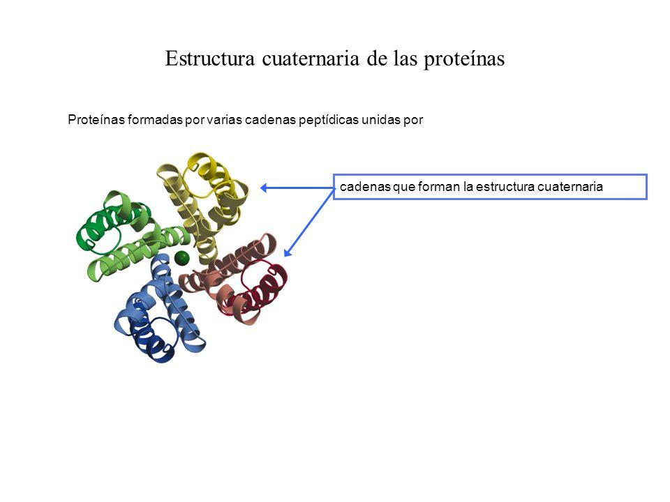Estructura cuaternaria de las proteínas