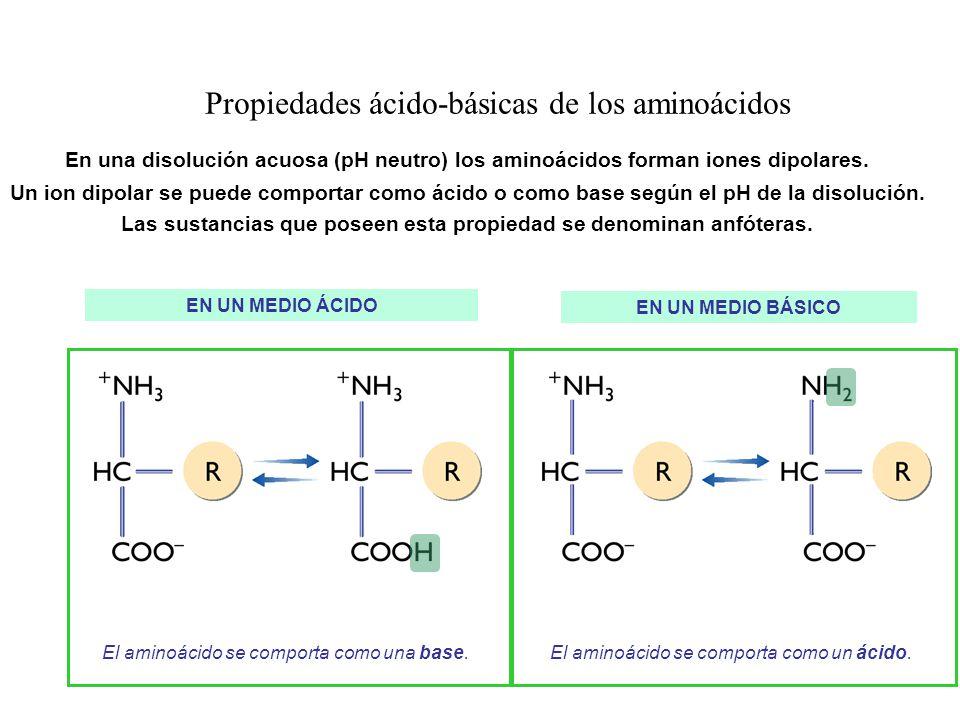 Propiedades ácido-básicas de los aminoácidos