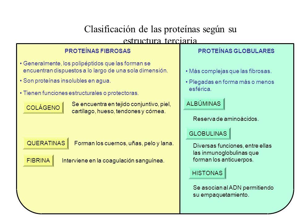 Clasificación de las proteínas según su estructura terciaria