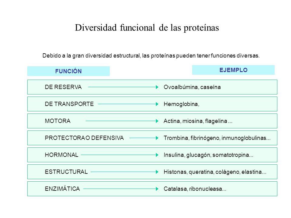 Diversidad funcional de las proteínas