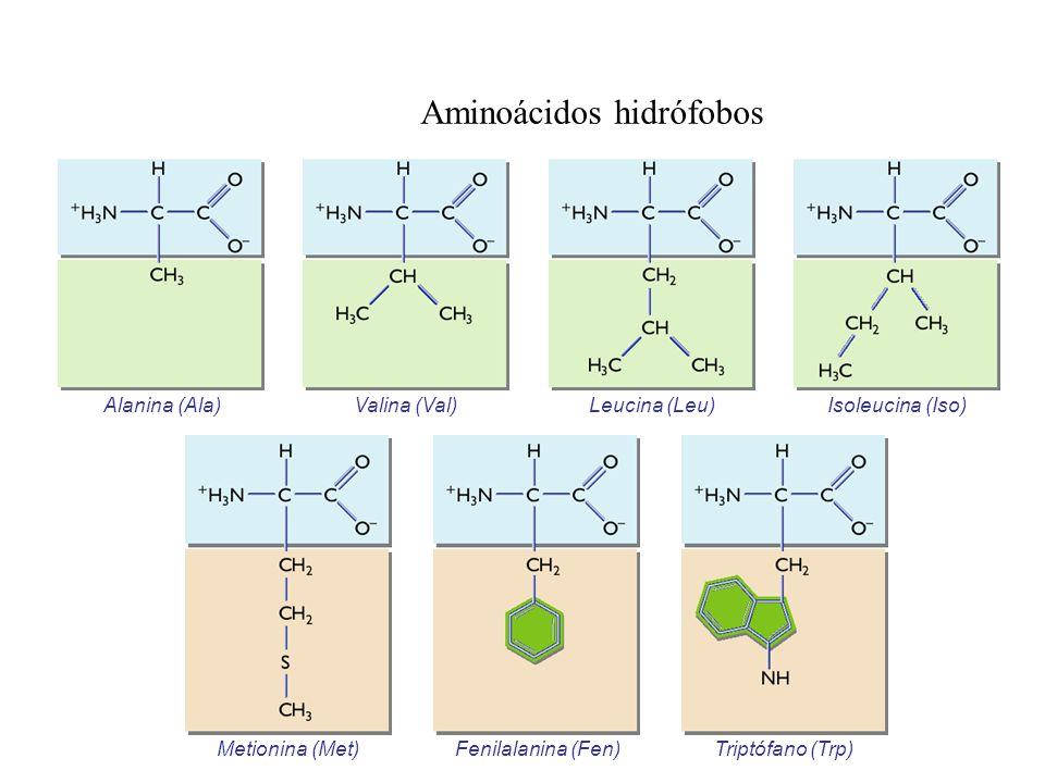 Aminoácidos hidrófobos