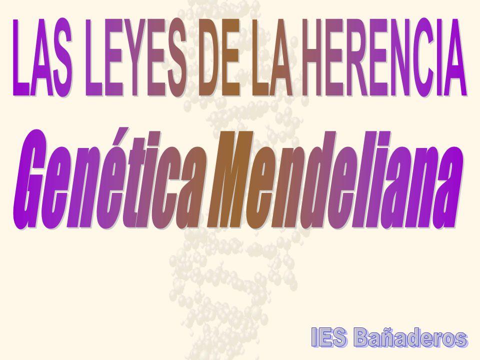 LAS LEYES DE LA HERENCIA