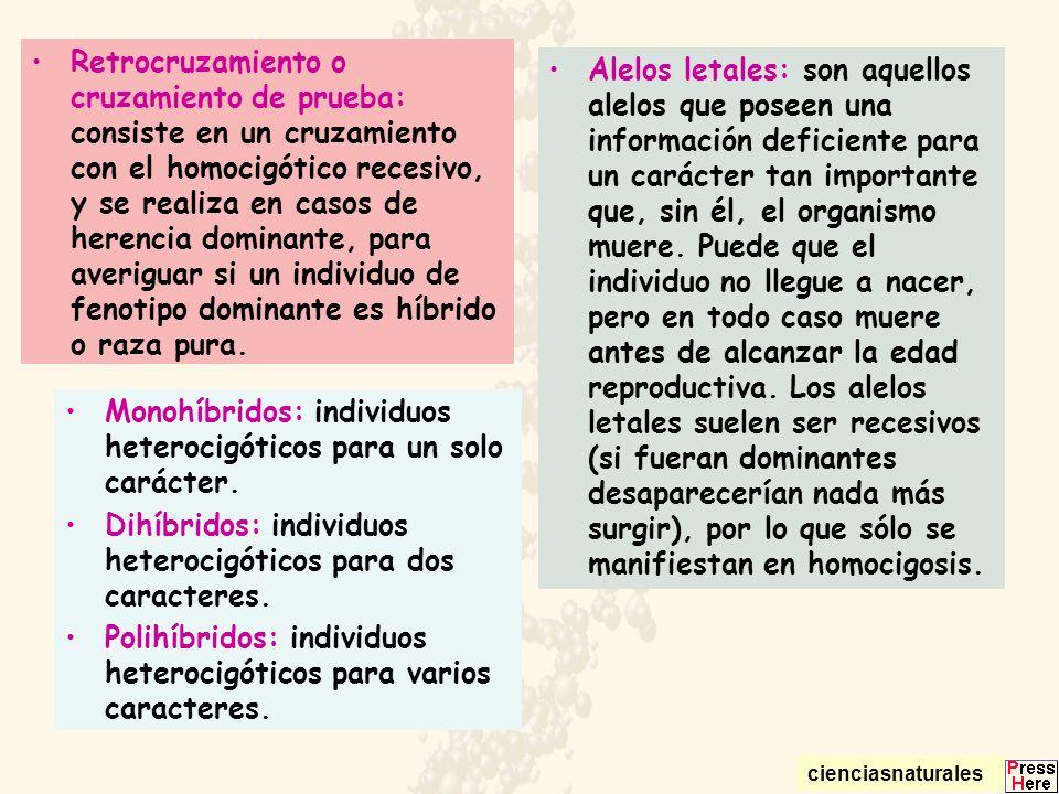 Monohíbridos: individuos heterocigóticos para un solo carácter.