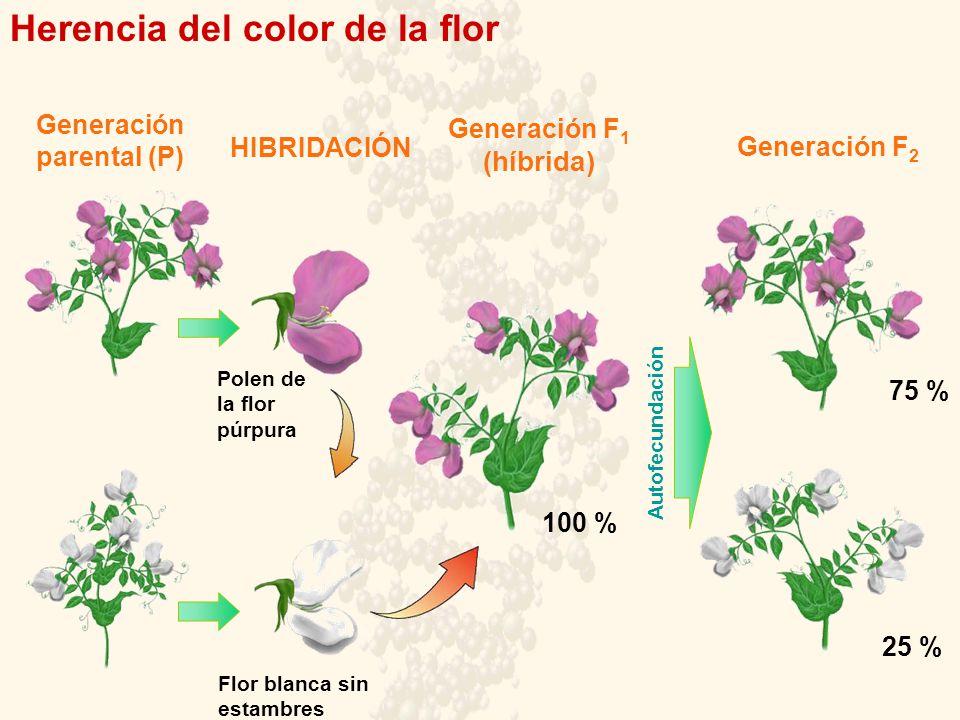Generación parental (P) Generación F1 (híbrida)