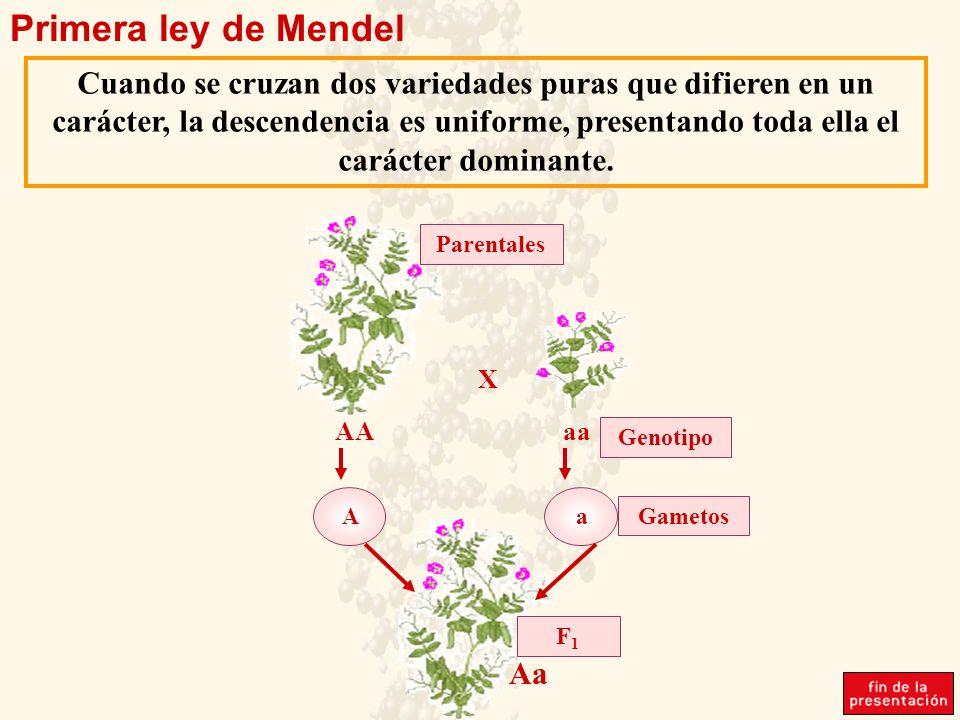 Primera ley de Mendel