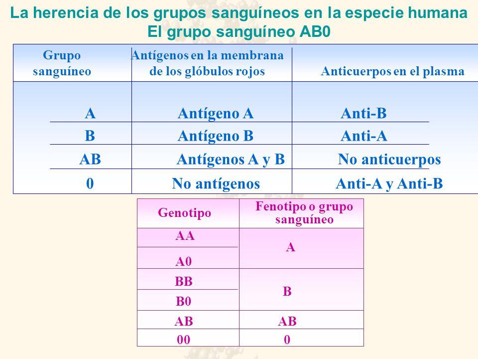 La herencia de los grupos sanguíneos en la especie humana El grupo sanguíneo AB0