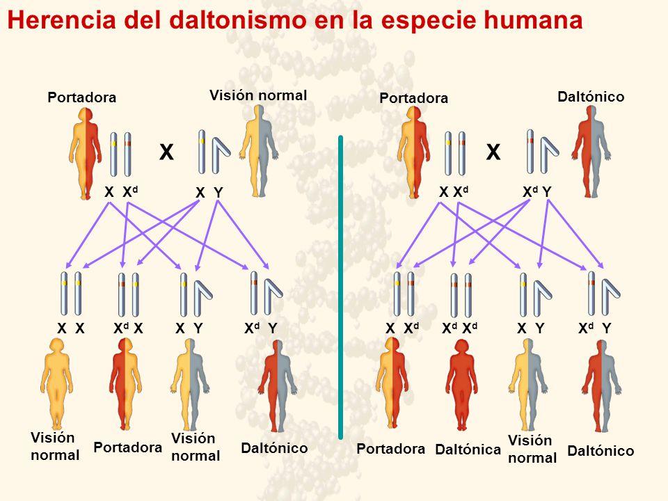 Herencia del daltonismo en la especie humana