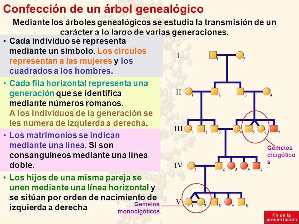 Confección de un árbol genealógico