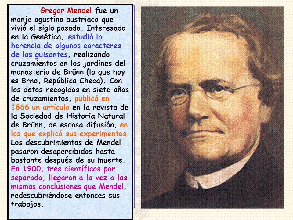 Gregor Mendel fue un monje agustino austriaco que vivió el siglo pasado.
