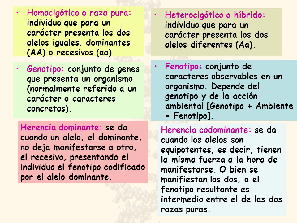 Homocigótico o raza pura: individuo que para un carácter presenta los dos alelos iguales, dominantes (AA) o recesivos (aa)