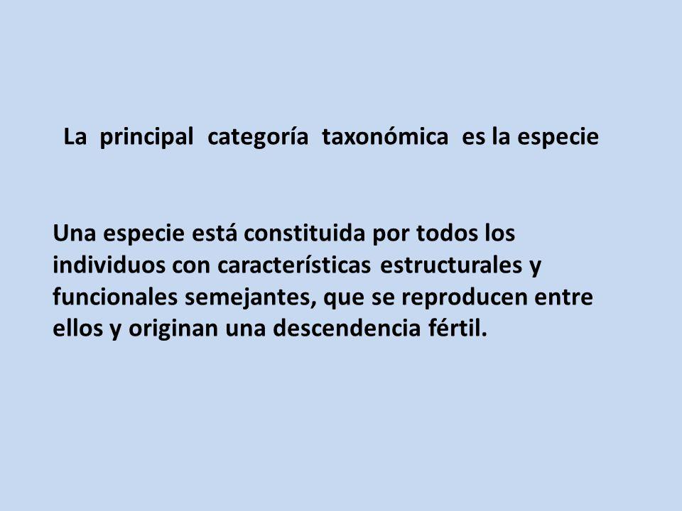 La principal categoría taxonómica es la especie