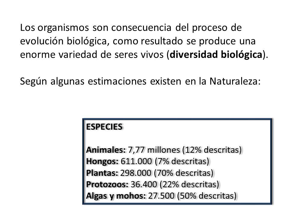 Según algunas estimaciones existen en la Naturaleza: