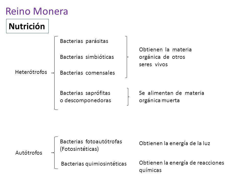 Reino Monera Nutrición Bacterias parásitas